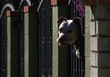 Have a Barking Dog? The City May Soon Charge You For That!