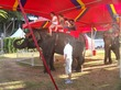 PETA & ADI Urge San Diego County Fair to End Elephant Rides