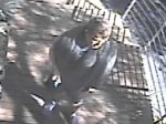 Burglary Suspect Caught on Camera    NR15106ti